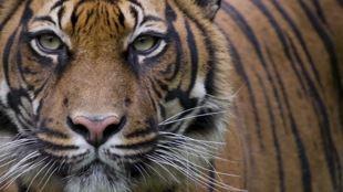 Tiger beer & WWF