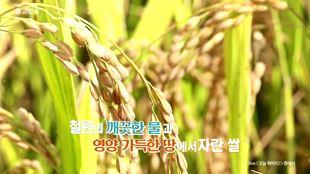 철원오대쌀